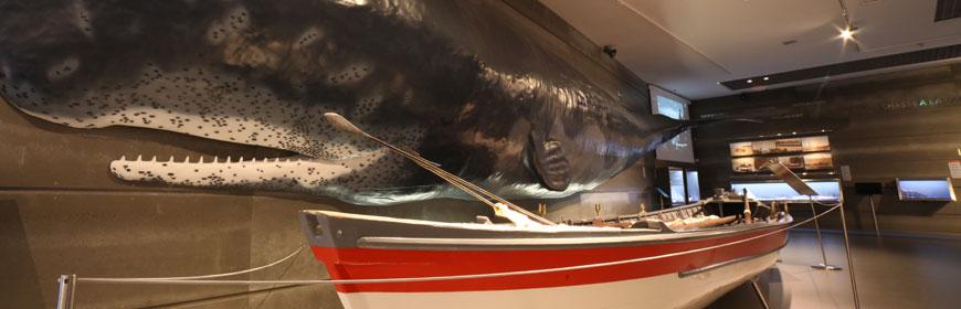 Exposições Permanentes no Museu da Baleia